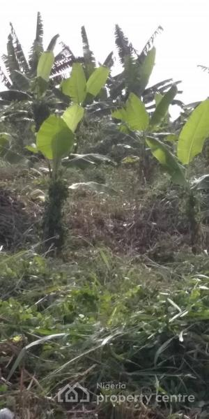 Cheap Land and Plantain Farm Forsale at Ijoko Ifo Lga, Ogun State, Nigeria., Ijoko, Ogun, Mixed-use Land for Sale