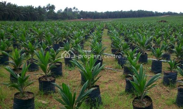 110 Acres with Palm Trees  with C of O, Akanran, Ibadan, Oyo, Industrial Land for Sale