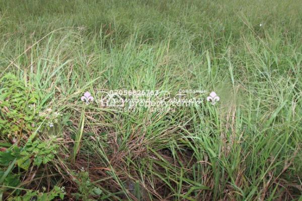 1000sqm Plot of Land Lekki Phase One, Lekki Phase 1, Lekki, Lagos, Residential Land for Sale