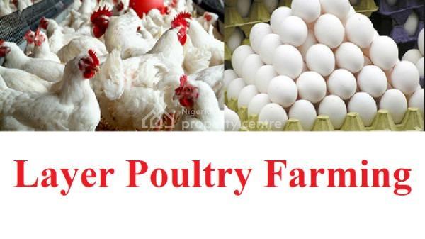 Poultry Farmland, Shapade Road, After Rccg Old Camp, Obafemi Owode, Ogun, Commercial Land for Sale