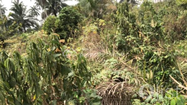 1000 By 1000 Feet Plots of Land, Utekon Community By Oluku Bypass, Benin, Oredo, Edo, Mixed-use Land for Sale