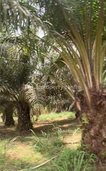 Acres of Fertile Farm Land, Odeda, Ogun, Mixed-use Land for Sale