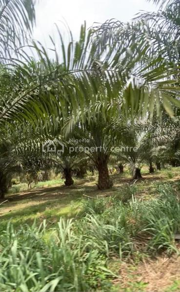 Available Farm Lands, Odeda, Ogun, Mixed-use Land for Sale