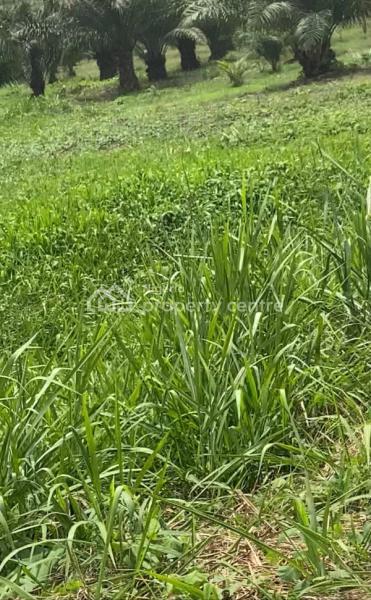 Cheap Farm Lands, Odeda, Ogun, Mixed-use Land for Sale