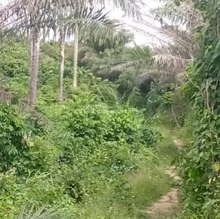 Over 100 Acres of Farm Land, Odogbawojo, Mojoda, Epe, Lagos, Commercial Land for Sale