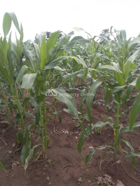 Agricultural Land with Proper Title, E-z Farms, Iwo, Osun, Commercial Land for Sale