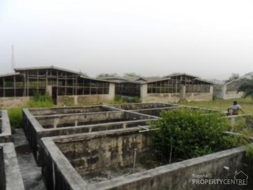 For sale poultry fish farm on 2 half acres oreta for Fish farm 3
