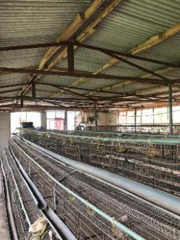 2 Acres with Poultry and Fishery Farm, Well Equipped with Pens, Ajenifuja, Honda Bus-stop, Sango Ota, Ogun, Commercial Property for Sale