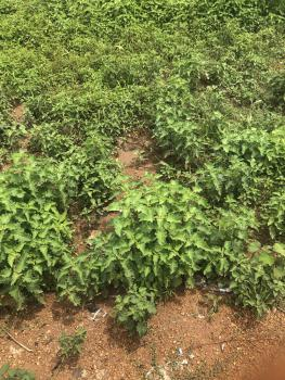 750sqm Residential Land, Kuje, Abuja, Residential Land for Sale