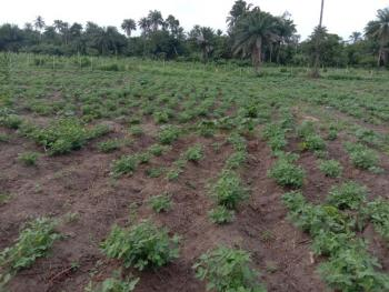 Farmland with Productive Returns, Remo North, Ogun, Commercial Land for Sale
