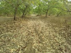 10 Acre Cashew Plantations, Ibarapa Central, Oyo, Filling Station for Sale