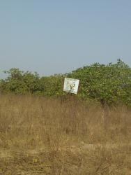 10 Acres Cashew Plantations, Ibarapa Central, Oyo, Commercial Land for Sale