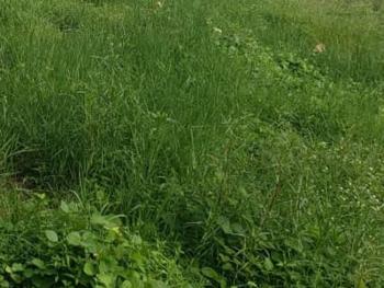 Land Measuring 800sqm, Royal Palm Drive, Osborne Phase 2, Osborne, Ikoyi, Lagos, Mixed-use Land for Sale
