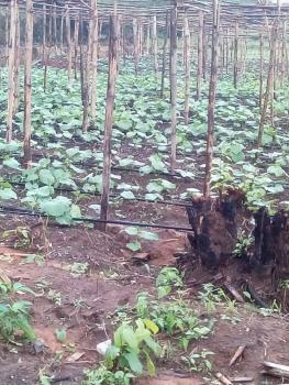Cheapest Farm Land, Westagro, Fidiwo Ipara, Remo North, Ogun, Commercial Land for Sale