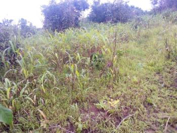 Plots of Land, Amoaba Junction, About 10 Mims Drive From Michael Okpara University., Ikwuano, Abia, Mixed-use Land for Sale