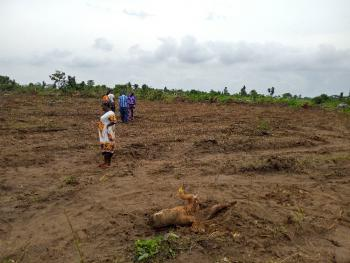 Acres of Land Available, Ikola, After Prime Mart., Ipaja, Lagos, Residential Land for Sale