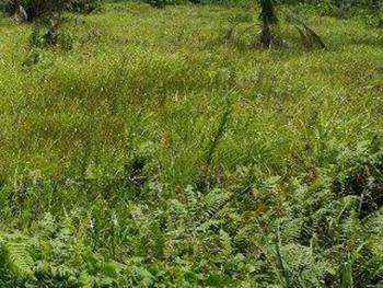Full Plot of Land, Alpha Beach, Igbo Efon, Lekki, Lagos, Residential Land for Sale