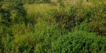 Genuine Plots of Land, Parkview, Ikoyi, Lagos, Residential Land for Sale