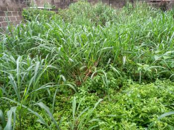 500sqm Plot of Land. Title : Governors Consent, Labak Estate, New Oko-oba, Agege, Lagos, Residential Land for Sale