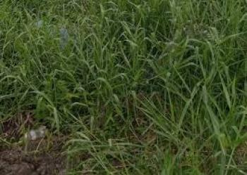 Mass Housing Land Size 153hectares with Fcda Old R of O, Asokoro District, Abuja, Residential Land for Sale