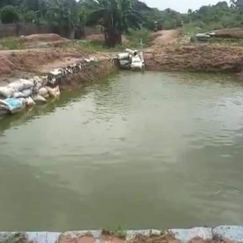 Oyibo Igbesa Agbodo Fish Pond, Igbesa Agbodo Ado Ota, Agbara-igbesa, Lagos, Factory for Sale