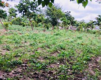 a Massive Farmland, Dobi, Gwagwalada, Abuja, Commercial Land for Sale