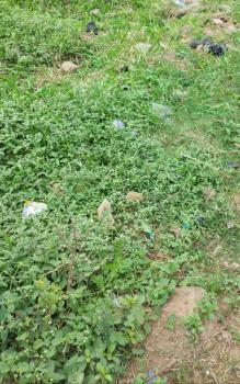 a Fully Fenced 513sqm Piece of Dry Land, Oakland Estate, Sangotedo, Ajah, Lagos, Residential Land for Sale