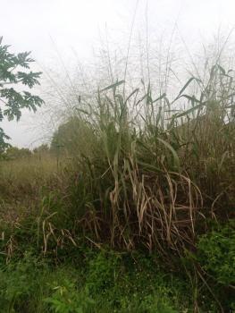 600sqm Land, Royal Garden Estate, Ajah, Lagos, Residential Land for Sale