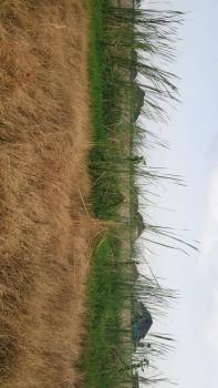 Corner Piece Plot for Sale., 6th Avenue, Festac, Isolo, Lagos, Mixed-use Land for Sale
