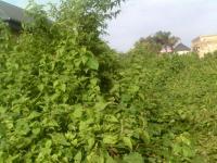 15 Hectares Of Land For Sale @ Lekki Epe Expressway, , Ibeju Lekki, Lagos, Land For Sale