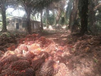 500 Acres of Palm Tree Farm, Oyo East, Oyo, Factory for Sale