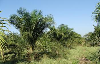 Industrial Land, Ologbo, Oil Refinery Area, Sapele Road, Ikpoba Okha, Edo, Industrial Land for Sale