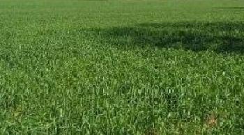 2 Plots of Land, Akoka, Yaba, Lagos, Land for Sale