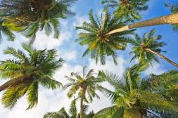 Palm Plantation on 100 Hectares of Land Fully Grown Palm, Ijebu East, Ogun, Commercial Land for Sale