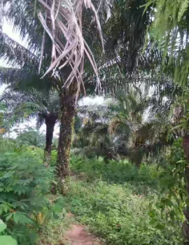 Urgent Sale of Farmland with Palm Trees, Ejigbo, Osun, Mixed-use Land for Sale