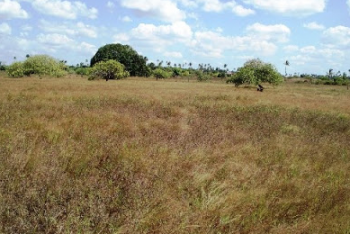 Residential Land  Measuring 1,534 Sqm, Maitama District, Abuja, Residential Land for Sale