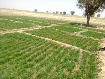 Arable and Fertile Farmland, Ologole Village, Moloko, Obafemi Owode, Ogun, Mixed-use Land for Sale