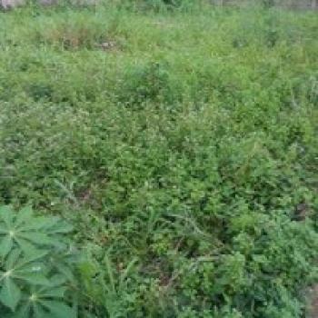 2000sqms, Ikoyi, Lagos, Land Joint Venture