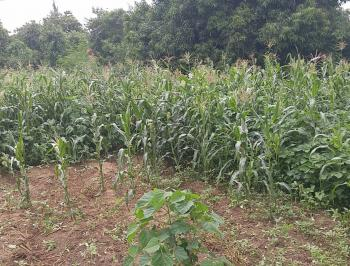 3452.9 Sqm Commercial Plot of Land, Behind Zone E, Apo, Abuja, Commercial Land for Sale