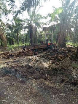 Palm Oil Farm, 18,000 Trees on 180 Hectares of Land, Owo, Ondo, Factory for Sale