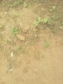 Plots of Land with C of O, Ibeju Lekki, Lagos, Land for Sale