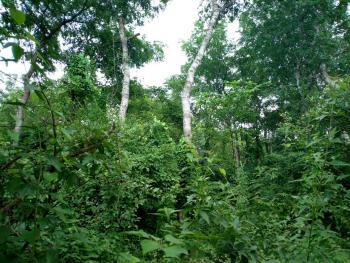 Over 500 Acres of Farmland, Off Funaab/alabata Road, Alabata Village, Odeda, Ogun, Land for Sale