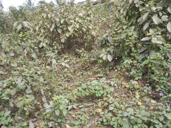 a Prime Fenced Land on 19,770 Sqm, Amuwo Odofin Industrial Scheme, Along Lagos Badagry Expressway, Orile Coker, Orile, Lagos, Industrial Land for Sale