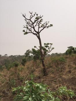 Selling a Very Sweet Table Land, Jahi, Abuja, Residential Land for Sale
