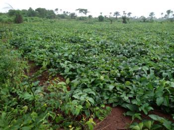 Mercyland Farm Estate Close to Redemption Camp, Off Lagos Ibadan Expressway, Obafemi Owode, Ogun, Industrial Land for Sale