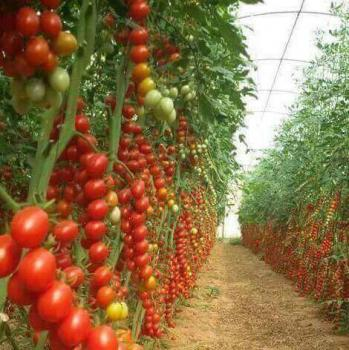 25 Hectares of Agricultural Farmland for Sale in Abuja, Dobi Farmland Layout, Gwagwalada, Abuja, Commercial Land for Sale