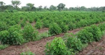 Farmland Measuring 20 Hectares, Kuje, Abuja, Commercial Land for Sale
