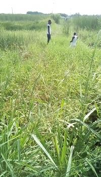 1000 Acres of Land with C of O in Badagry Is for Sale, Badagry, Badagry, Lagos, Mixed-use Land for Sale