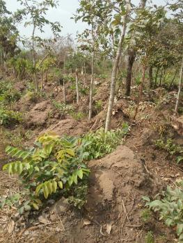 5000 Acres of Land  (flexible Payment), Ilaju, Eruwa Road, Ido, Oyo, Residential Land for Sale