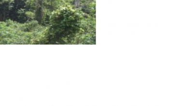 40 Acres of Land, Oyo Road, Akinyele, Oyo, Mixed-use Land for Sale